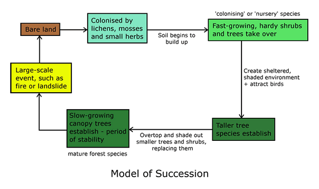 Model of succession.