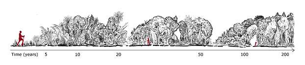 Stages of forest development over time (image by Lloyd Esler).