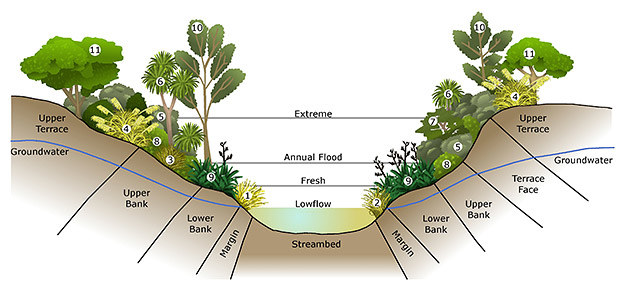 Vegetation profile for streams, rivers and ponds.