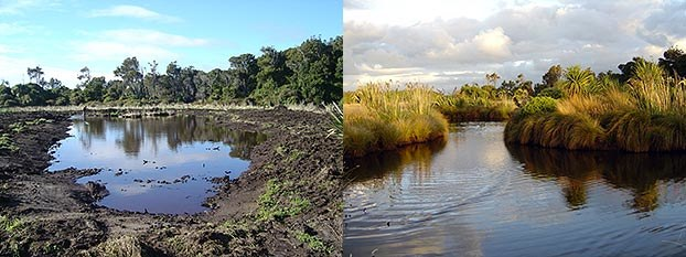 Before and after photos of Rance's pond.