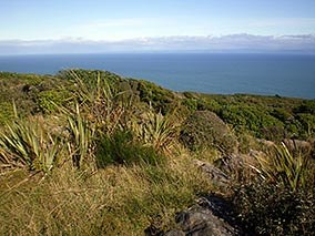 Coastal shrubland at Bluff.