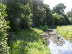 Riparian Forest at Thomsons Bush Invercargill