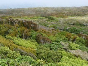 Coastal Shrubland at Bluff Hill