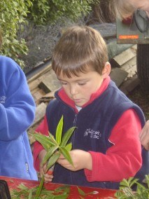 Limehills School children learn how to take cuttings.