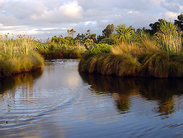 Find out about Southland's natural habitats and learn about restoration.